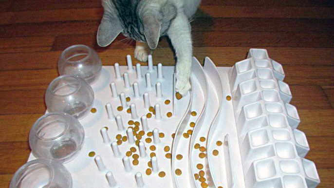 Cat playing with a food puzzle