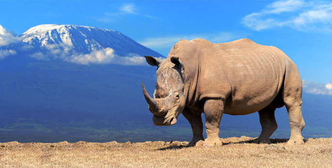 Rhino on a cliff with mountain background behind