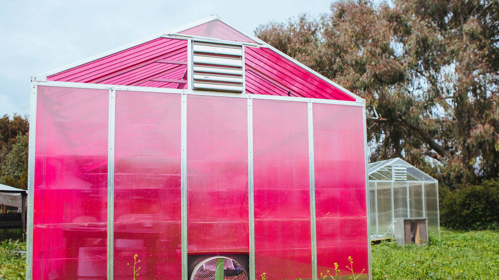 Pink greenhouse first frame